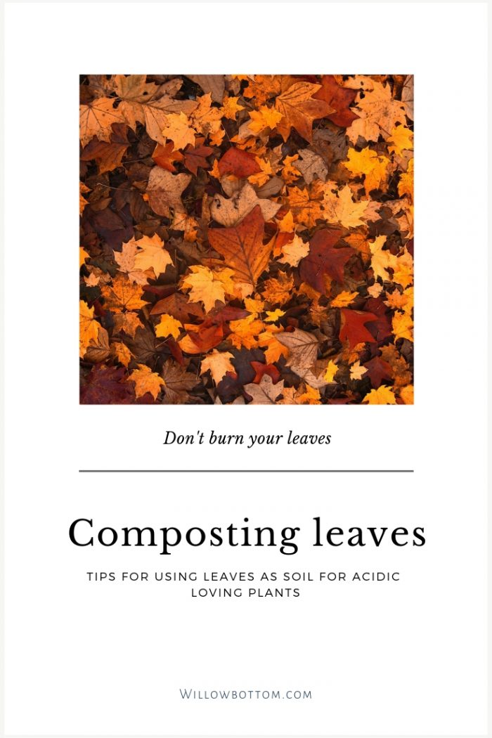 orange leaves with text
