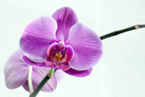 Orchids for the non green thumb