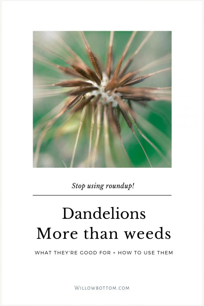Dandelion seeds with text