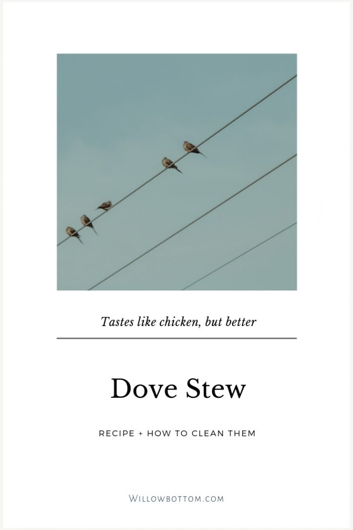 doves on a line