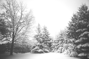 Read more about the article Tips for keeping those winter blues away